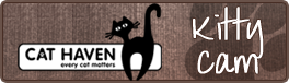 Kitty Cam logo
