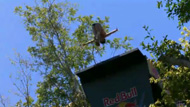 Red Bull Cliff Diving Mexico